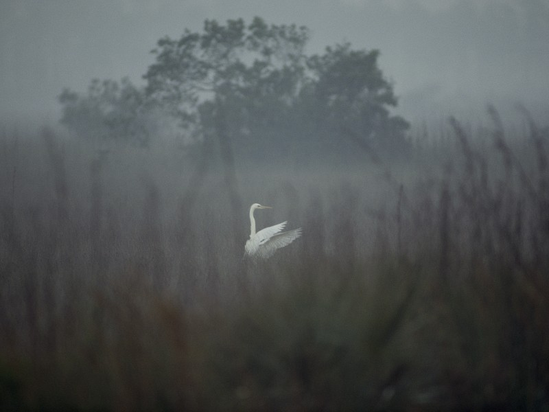 Egrets are one of 400 bird species that call the Everglades home.