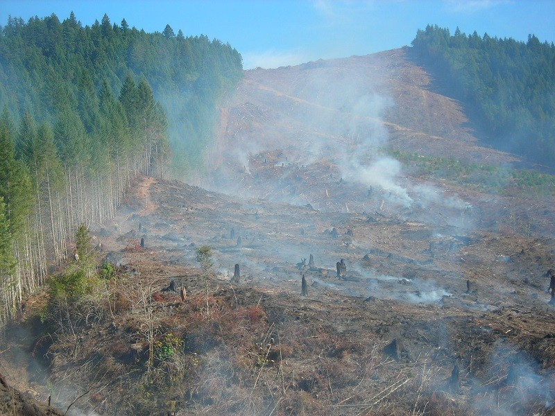 Oregon_Forest_clearcut