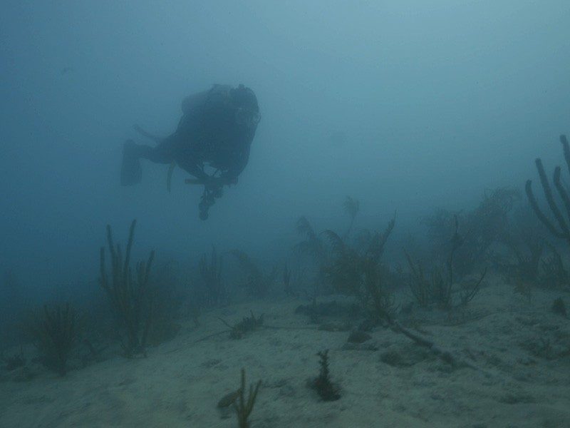 Rachel Silverstein, Executive Director and Waterkeeper of Miami Waterkeeper, floats above suffocated coral and through low visibility caused by displaced sediment from the PortMiami dredging project.