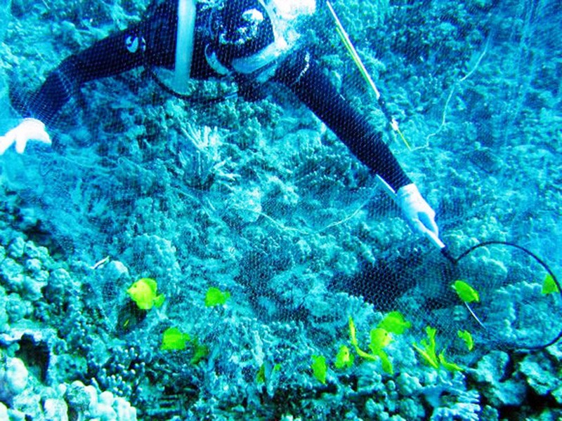 An aquarium collector takes fish from a reef in Hawai`i.