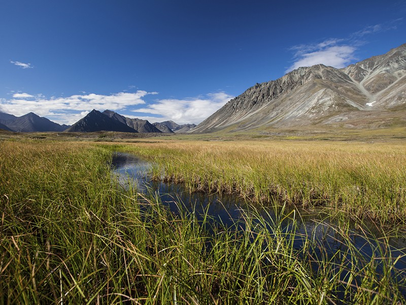 Senators Bennet and Markey Introduce Bill to Protect the Arctic National Wildlife Refuge ...