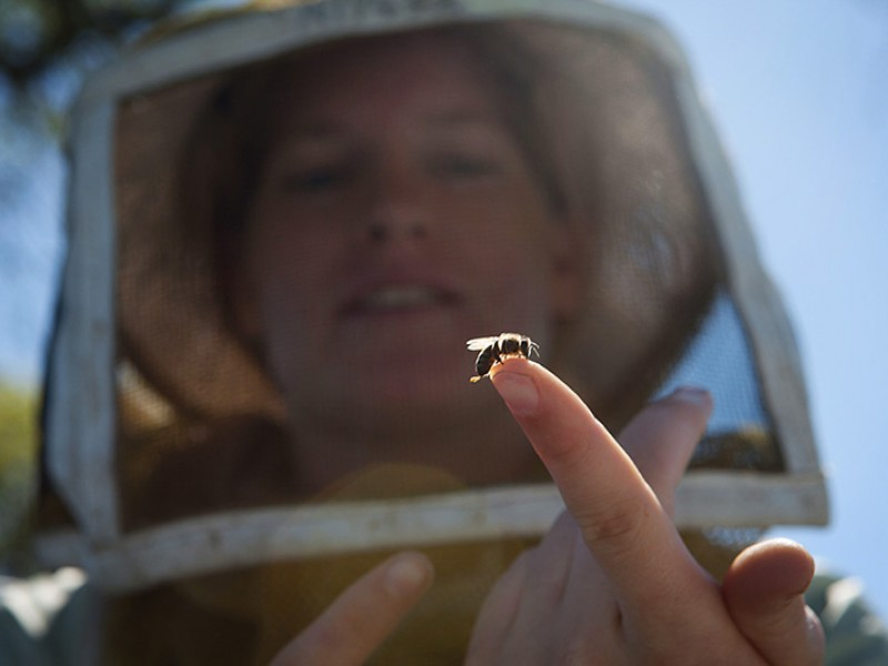 Alyssa Anderson, a second-generation beekeeper, holds a baby bee in a California orchard.