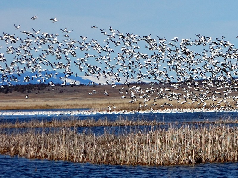 Earthjustice is petitioning for a ban on the use of neonictinoids in wildlife refuges in California like the Ash Creek Wildlife Area in Big Valley.