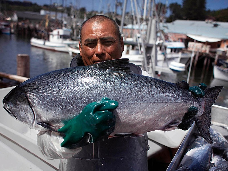 Fisherman Jose Chi holds up a salmon, caught during the spring 2014 run, at Fort Bragg, CA.