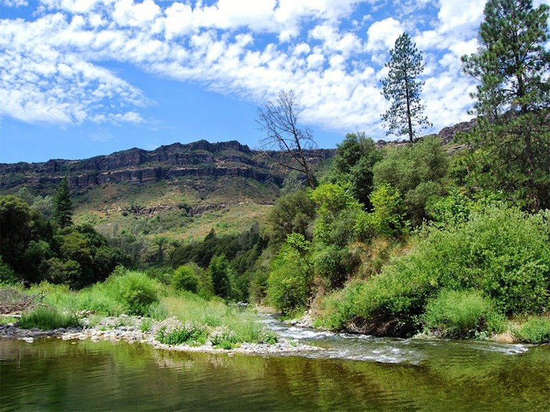 Butte Creek, during the Chinook spring-run in 2014.