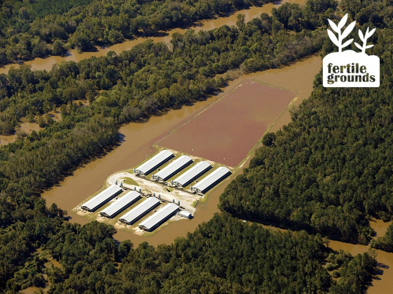 A flooded factory farm waste lagoon in Goldsboro, N.C.