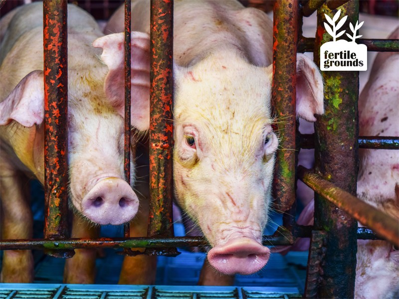 Earthjustice is heading to court to fight a rule that exempts livestock facilities from reporting their pollution.