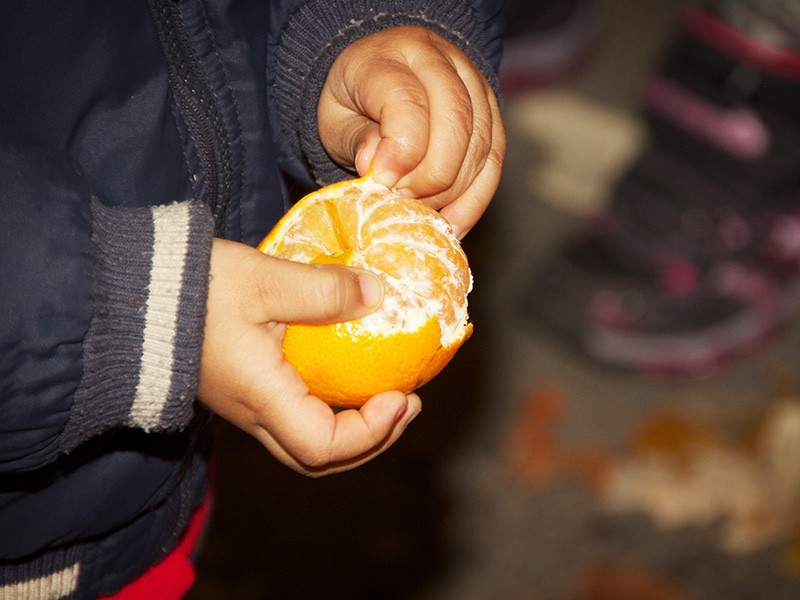 Child peeling a clementine: children often experience greater exposure to chlorpyrifos because they drink more water and juice for their weight, relative to adults, and frequently put their hands in their mouths.