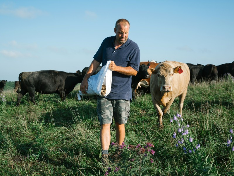 Farmers in Iowa, like Seth Watkins shown here feeding his cows, are restoring the land and climate by combining age-old practices with new knowledge.