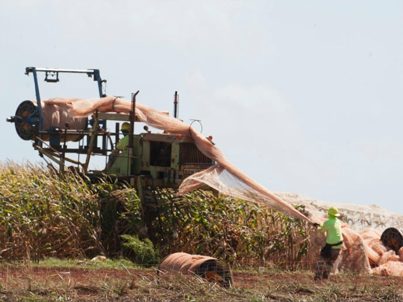 Farming operations on Kaua'i.