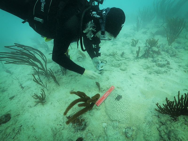 Rachel Silverstein, Executive Director and Waterkeeper of Miami Waterkeeper, examines coral suffocated by sediment following the PortMiami dredging project.