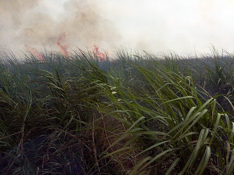 Burning of a Florida sugar cane field. 150,000 acres are burned each year, emitting more than 2,800 tons of hazardous air pollutants per year.