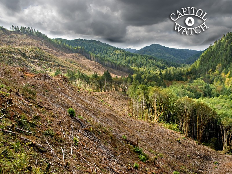 Clear-cut logging operations have already devastated forests in Oregon. This bill will allow even larger areas to be razed for timber production without public comment.