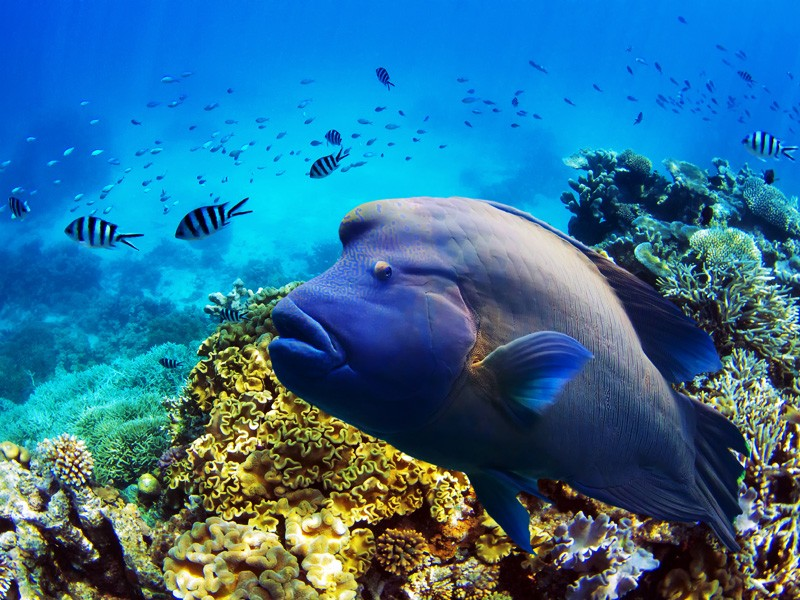 Global hunger for coal endangers the great barrier reef for Great barrier reef fish