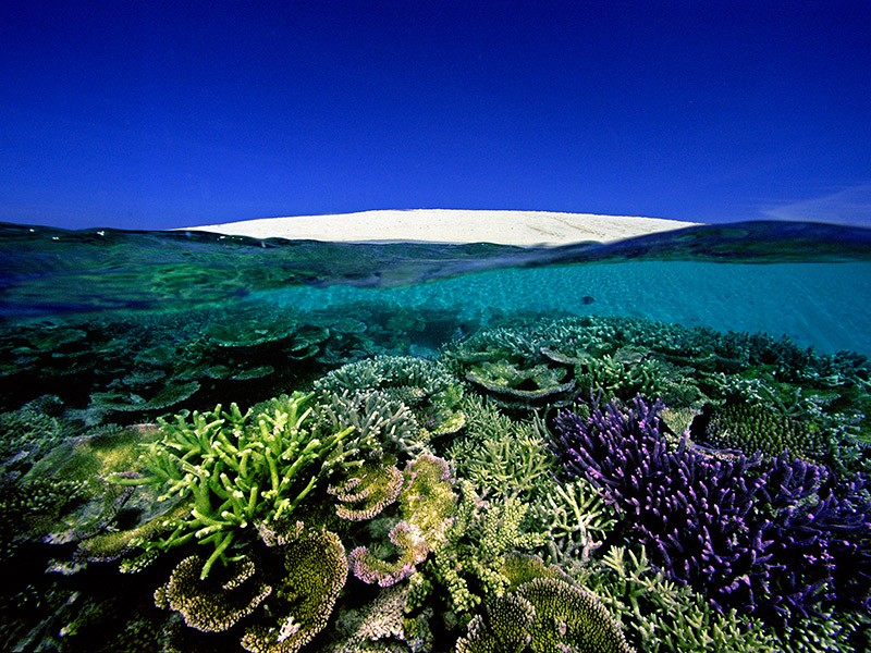 Number 6, Sand Key, Great Barrier Reef. Many scientists believe that if we continue emitting carbon dioxide at current levels, all corals will likely be threatened by mid-century.
