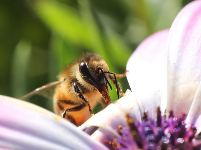 Earthjustice's Andrea Delgado appeared on Buenos Días D.C. to discuss a major recent victory for honeybees.