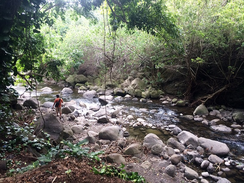 The newly restored flows to `Īao Stream (traditionally known as Wailuku River).