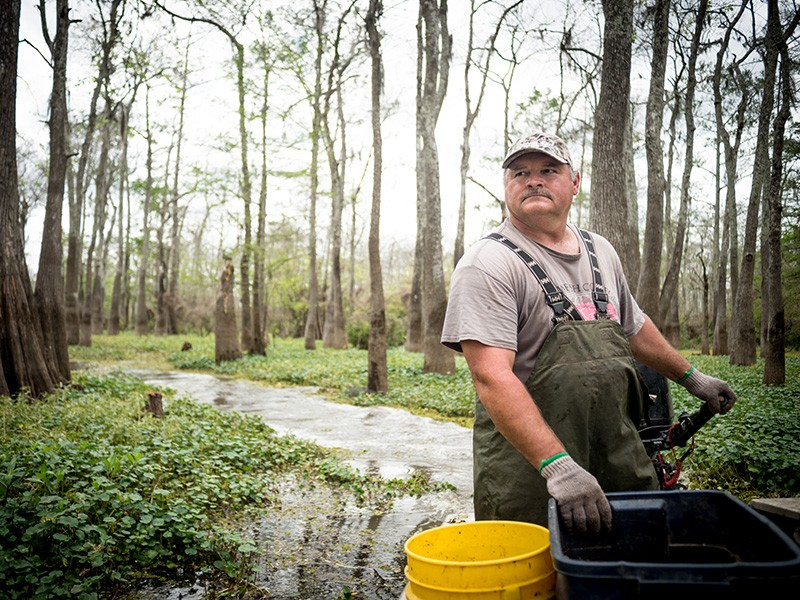 Crawfisherman Jody Meche drives through Louisiana's Atchafalaya Basin on his way to check his traps.