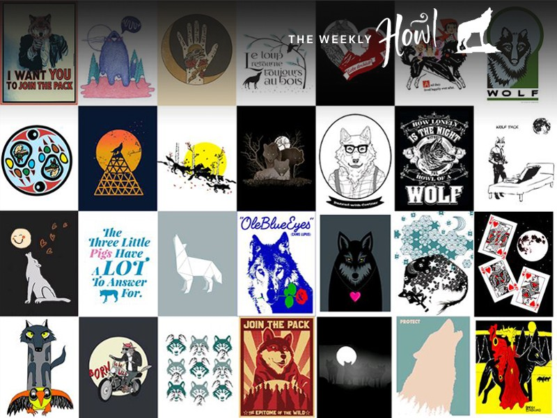 Help spread the word that wolves deserve to be respected and protected; vote for your favorite wolf art to be included in a national advocacy campaign this fall!