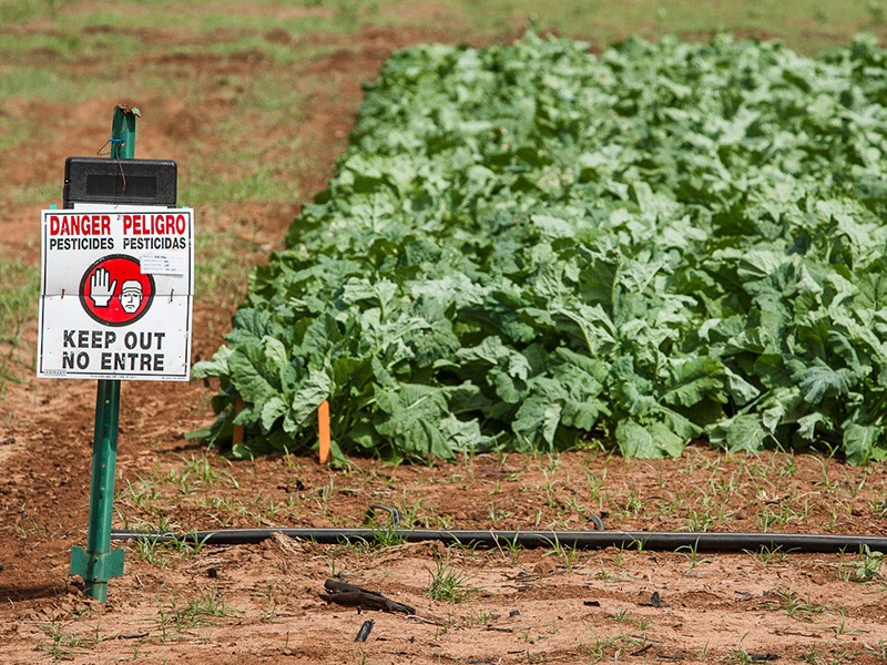 A sign warning of pesticide application near a field of GMO crops on Kauaʻi.