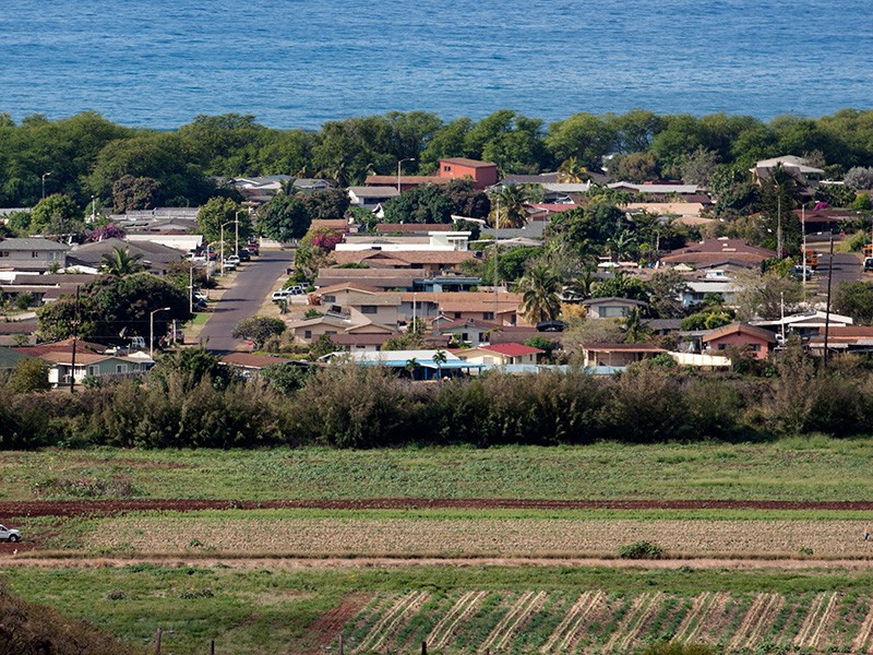 Fields planted with GMO crops, and sprayed with pesticides, are located adjacent to homes on Kauaʻi.