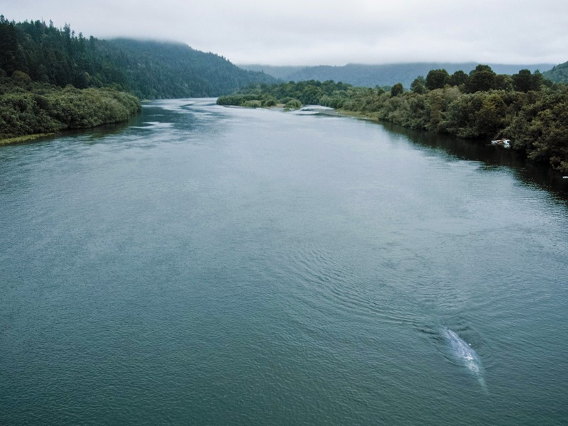 Poor water management on the Klamath River has caused a swift decline in salmon stocks, threatening the Yurok people's livelihood.