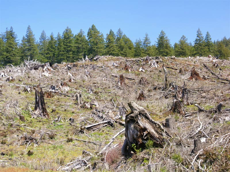 Clearcut logging slope, in Cascades east of Newport, Oregon Coast.