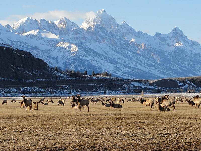 The snow cover receding at the National Elk Refuge on the first day of spring in 2014.