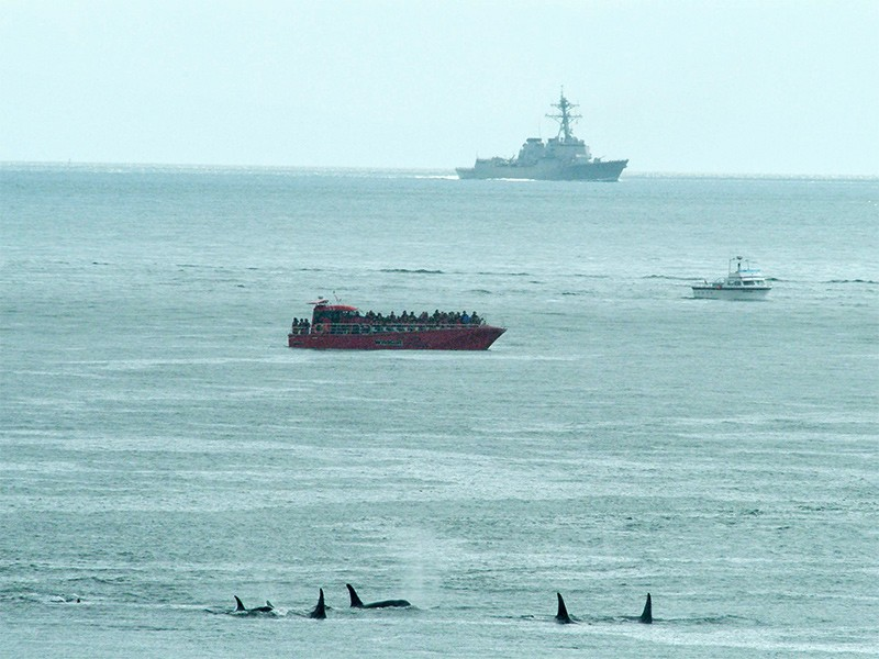 A U.S. Navy vessel, with a research ship and pod of orcas in the foreground.