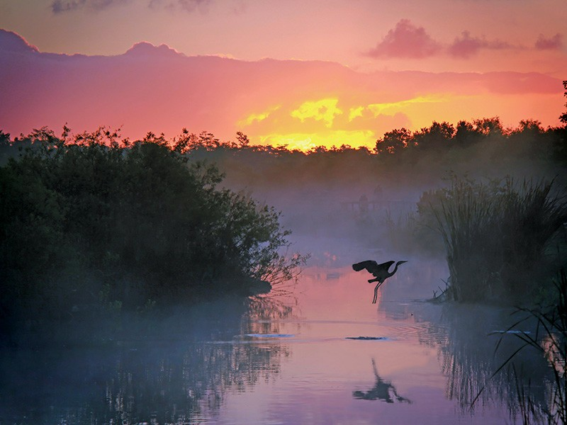 Everglades National Park is one of America's great places. The vast South Florida marsh is the largest continuous stand of sawgrass prairie left in North America and is the continent's most significant tropical bird breeding ground.