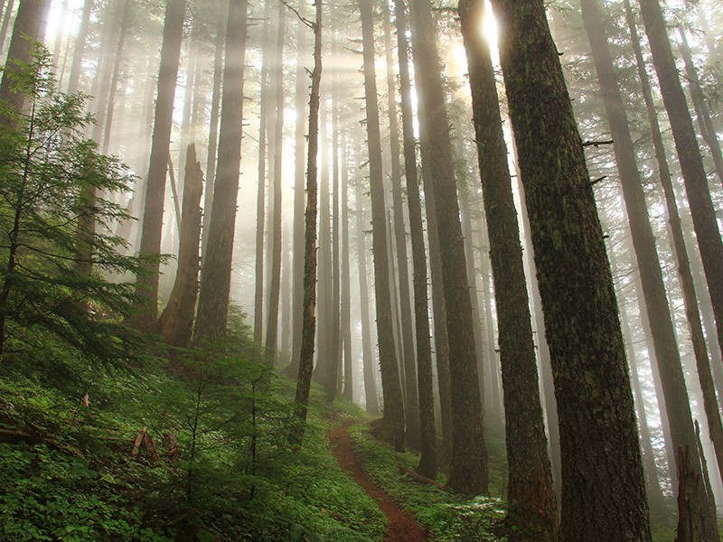 A BLM-managed forest in Oregon.
