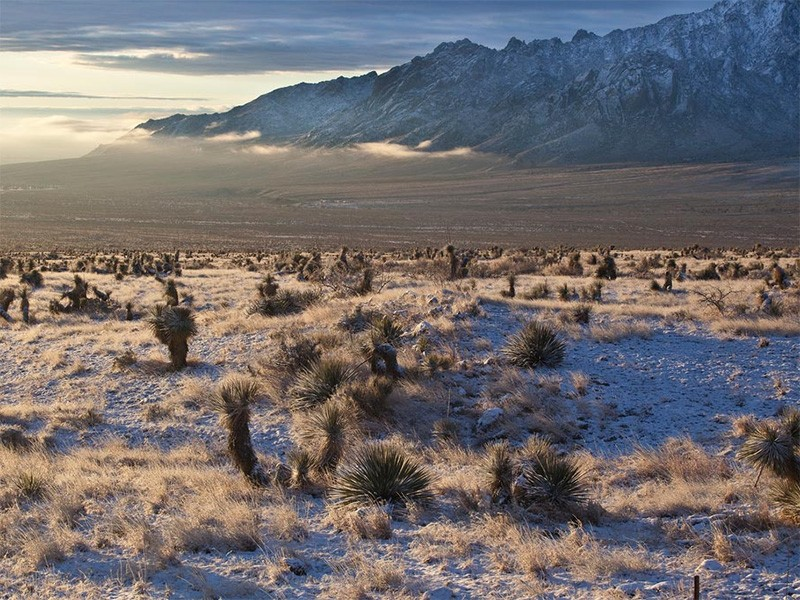 The Organ Mountains range from 4,600 to just over 9,000 feet, and are so named because of the steep, needle-like spires that resemble the pipes of an organ.