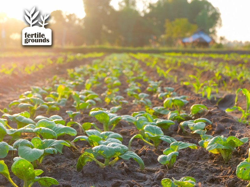 A new vision for agriculture would eliminate wasteful land use and make carbon sequestration an agricultural product.