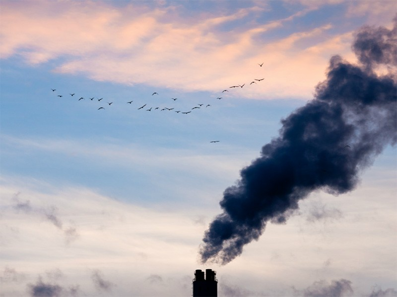A flock of birds fly past a smokestack of a coal-fired power plant.