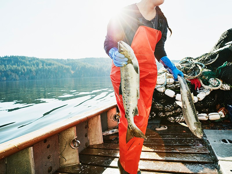 A fishing crew member carries salmon to the hold of boat, Washington, United States.
