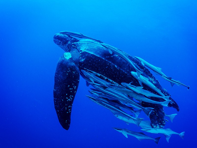 Pacific Leatherback Conservation Day