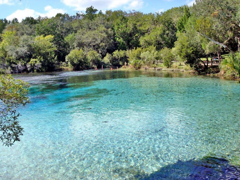 Silver Glen Springs in the Ocala National Forest, Florida