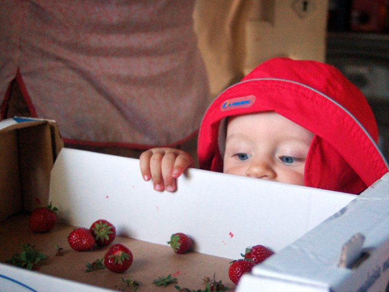 "Strawberries are one of the many crops that chlorpyrifos is used on. The 1996 Food Quality Protect Act requires EPA to ensure with reasonable certainty that ""no harm will result to infants and children from aggregate exposure"" to pesticides."