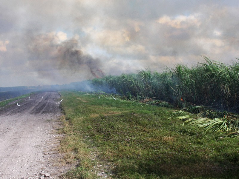 A Florida sugar cane field on fire. 150,000 acres are burned each year, emitting more than 2,800 tons of hazardous air pollutants per year.