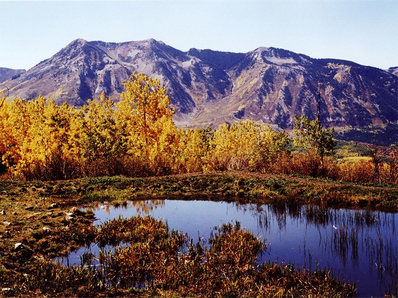Aspens in full color during autumn in the Sunset Trail Roadless Area.