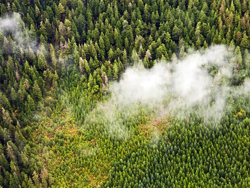 An aerial view of regrowth following clear-cuts in the Tongass National Forest.