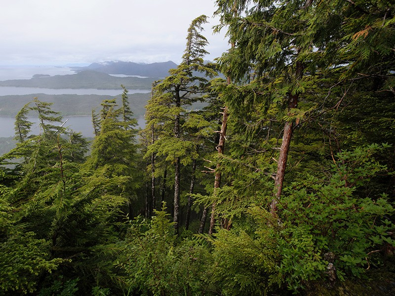 Tongass National Forest, view from Deer Mountain Trail.