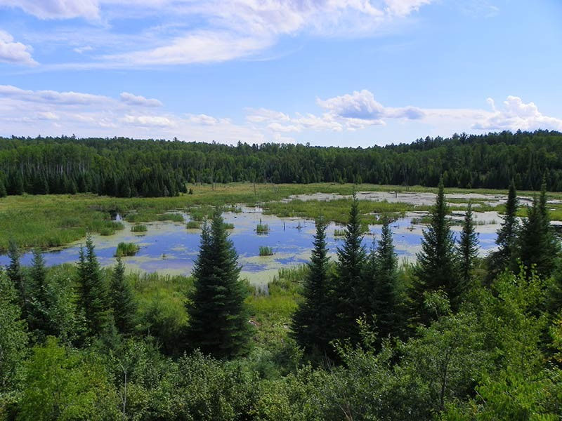 A beaver pond in Voyageurs National Park.