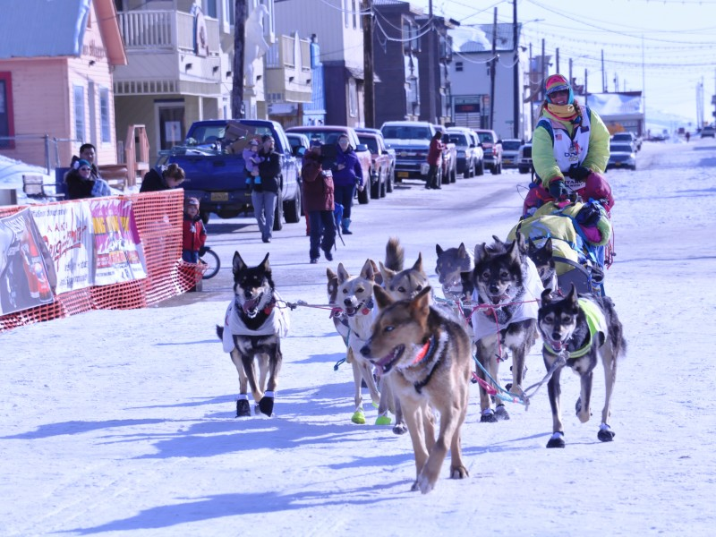 Author Monica Zappa and her dog team (above), with Blue Steel in the lead, arrive in Nome, Alaska, in 2015.