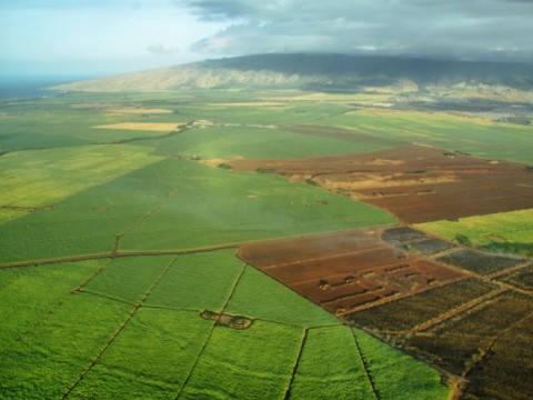 Aerial view of sugarcane fields on the island of Maui