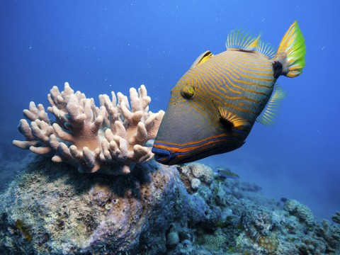 The future of priceless World Heritage sites like the Great Barrier Reef depends on the immediate reduction of climate-change-inducing greenhouse-gas emissions, but many of the governments responsible for protecting these sites are failing to take strong