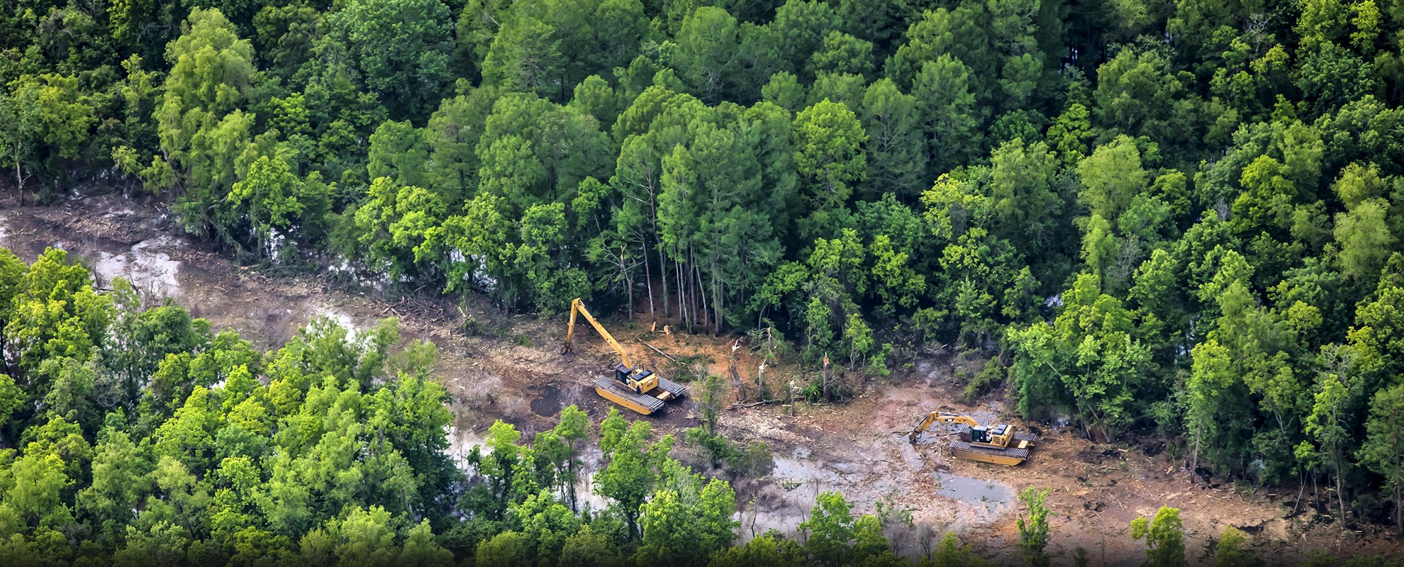 Ancient cypress tress are cleared in the Atchafalaya Basin for the Bayou Bridge pipeline.