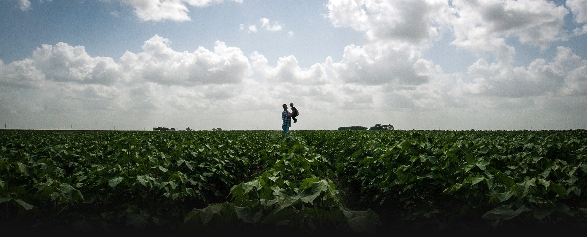 A father and son in a cotton field in El Campo, Texas. Chlorpyrifos is widely used on cotton. The EPA has acknowledged its legal obligation to protect children from pesticide drift.
