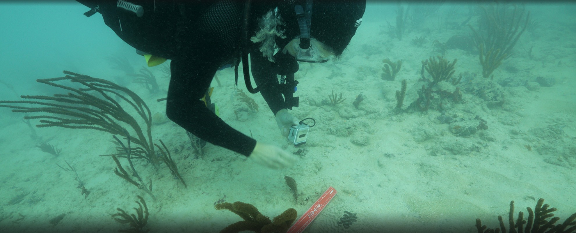 Rachel Silverstein, Executive Director and Waterkeeper of Miami Waterkeeper, examines coral suffocated by sediment following the Port of Miami dredging project.
