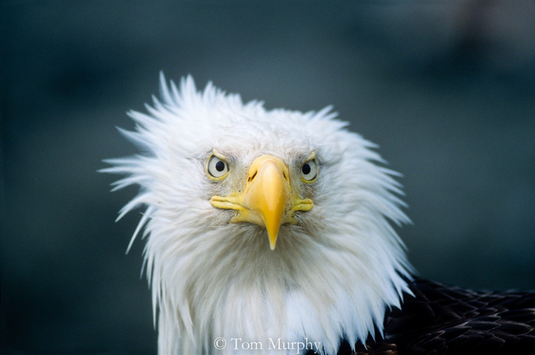 """""""A bad feather day."""""""